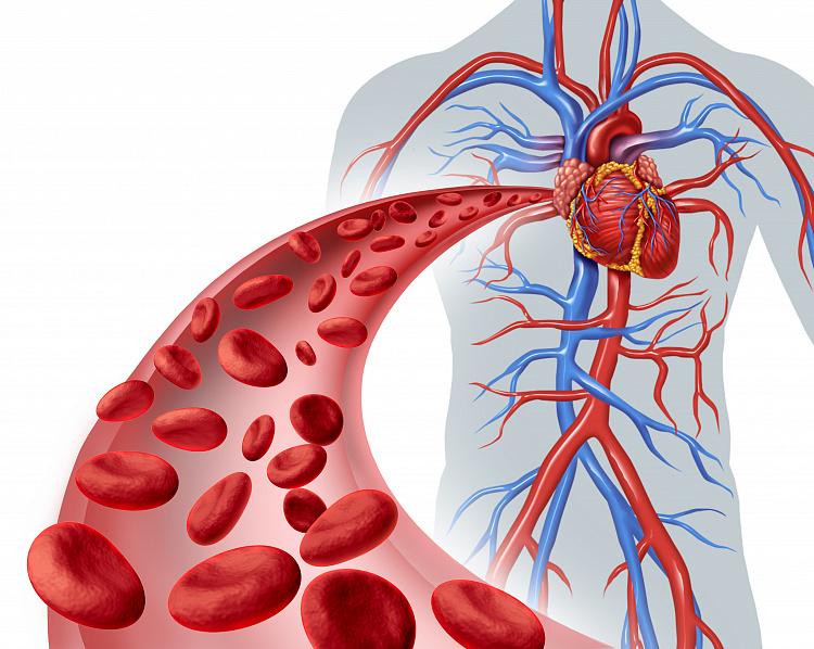 Расстройство кровообращения (Часть 1)